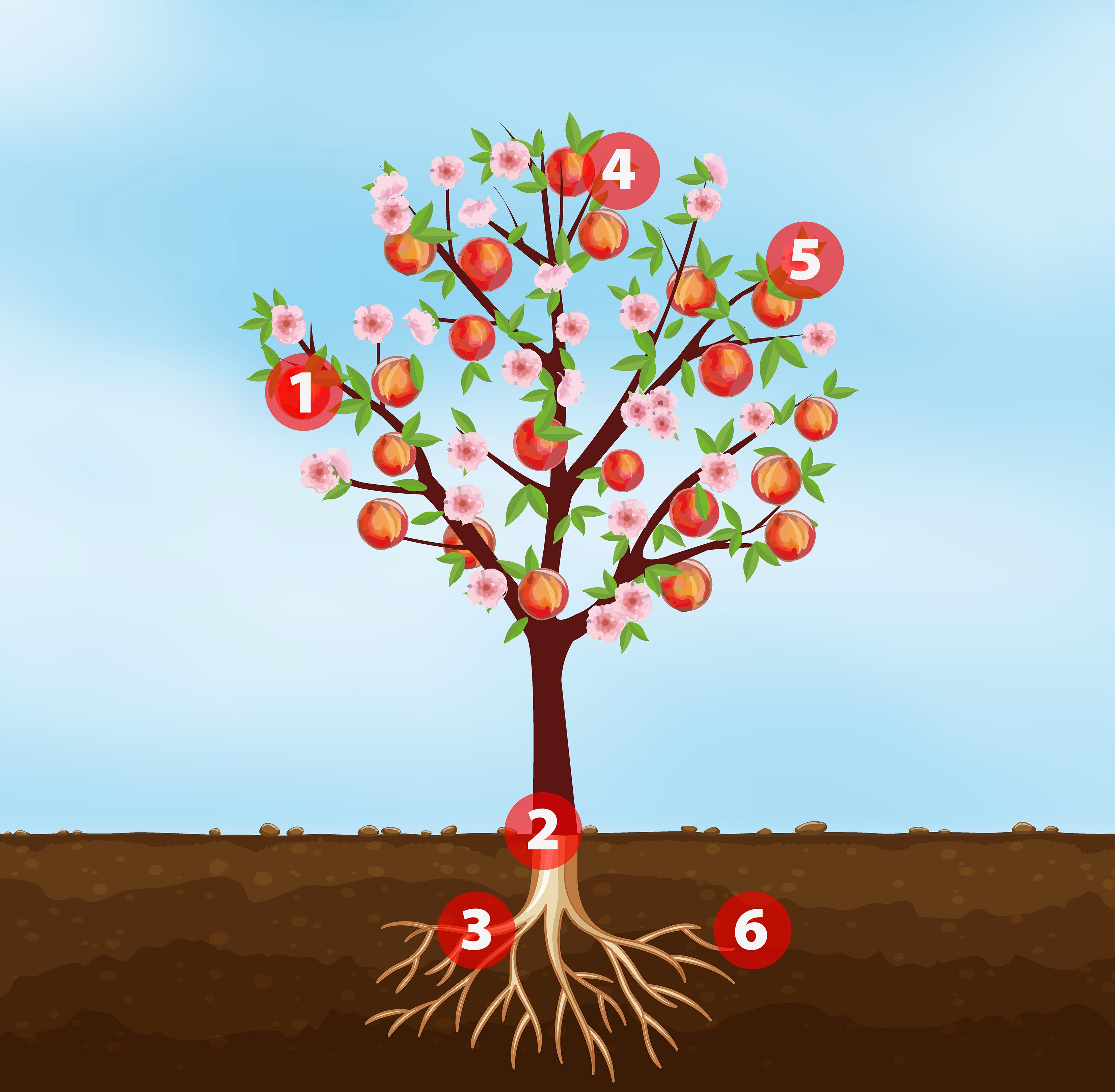 Schéma de la croissance des plantes